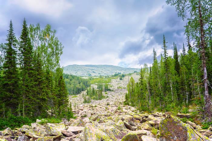 Sibirisk Lärk och dess vackra ryska natur